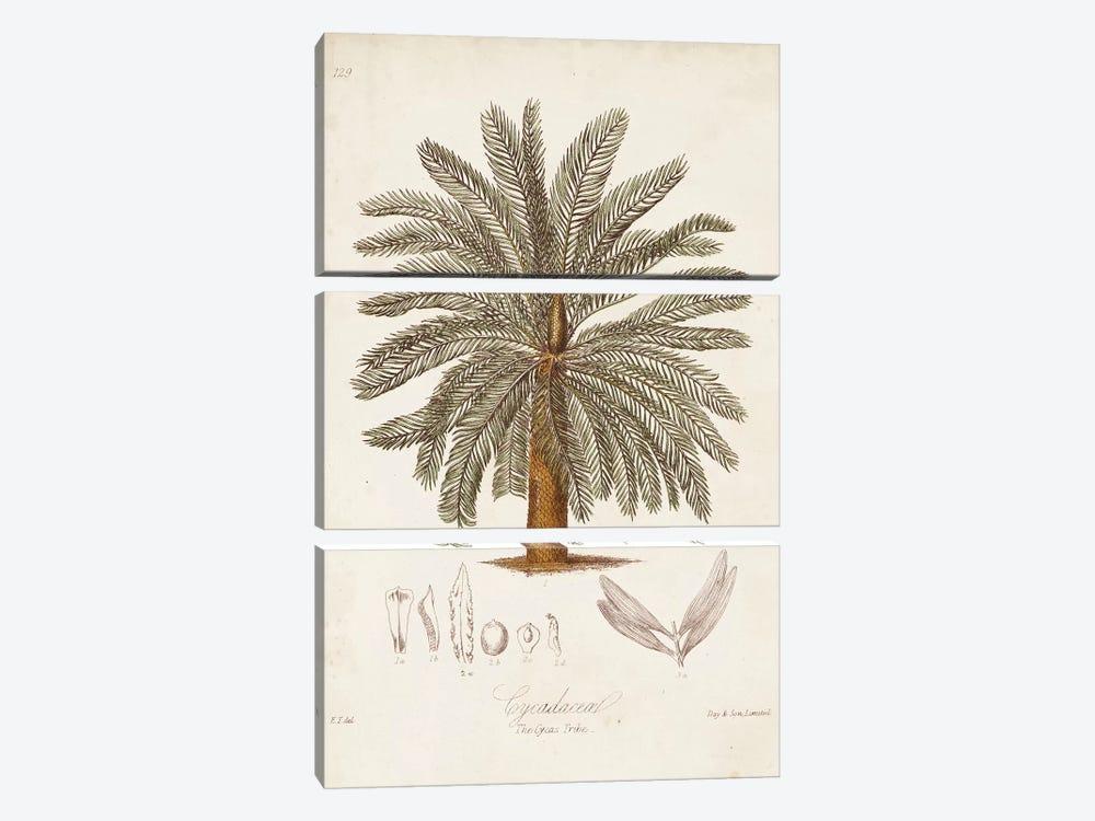 Antique Tropical Palm I by Elizabeth Twining 3-piece Art Print