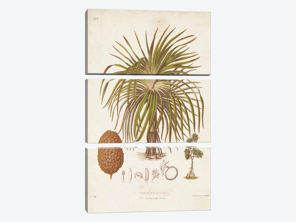 Antique Tropical Palm II 3-piece Canvas Wall Art