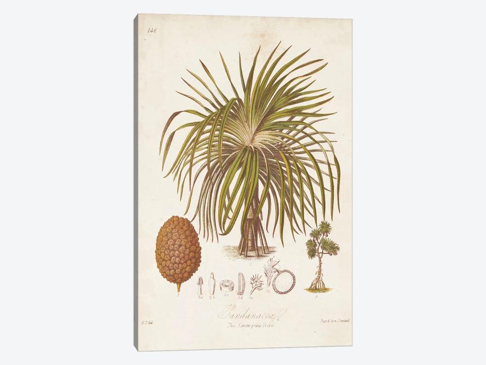 Antique Tropical Palm II by Elizabeth Twining 1-piece Canvas Artwork