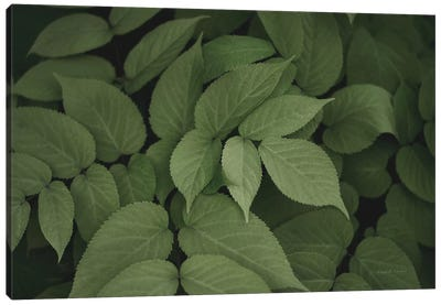 Leafy I Canvas Art Print