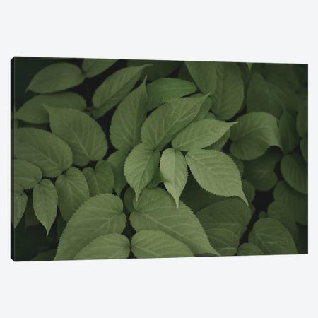 Leafy I Canvas Print #EUR1} by Elizabeth Urquhart Canvas Art Print