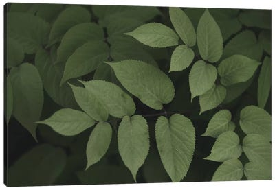 Leafy II Canvas Art Print