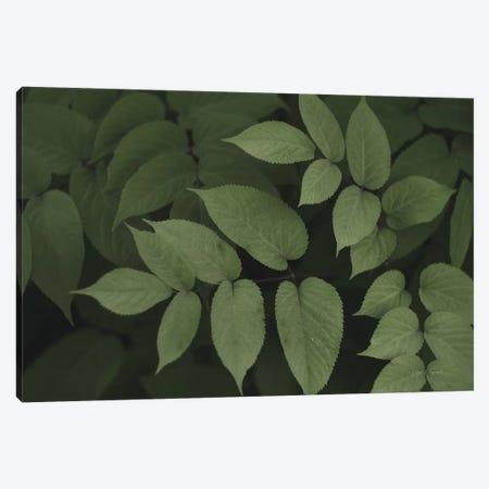 Leafy II Canvas Print #EUR2} by Elizabeth Urquhart Canvas Art Print