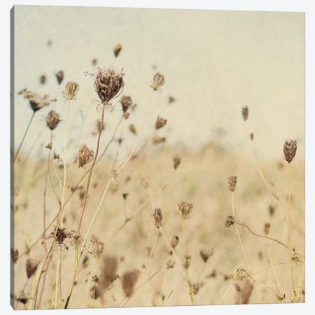 Falling Queen Annes Lace II Crop Sepia Canvas Print #EUR36} by Elizabeth Urquhart Canvas Artwork