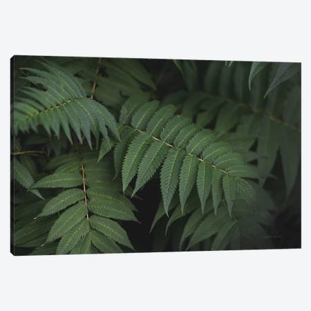 Leafy V Canvas Print #EUR3} by Elizabeth Urquhart Canvas Print