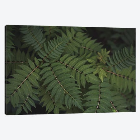 Leafy VI Canvas Print #EUR4} by Elizabeth Urquhart Canvas Wall Art