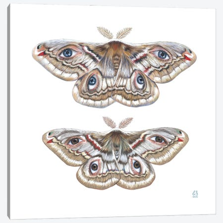 Two Moth Canvas Print #EUS20} by Eugenia Shchukina Canvas Print