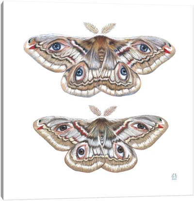 Two Moth Canvas Art Print