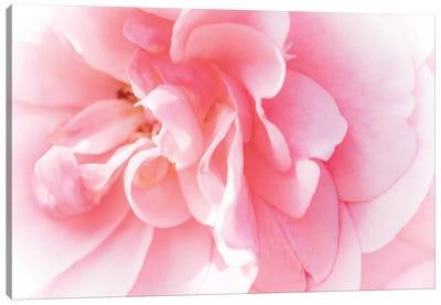 Pretty Pink Blooms IV Canvas Art Print