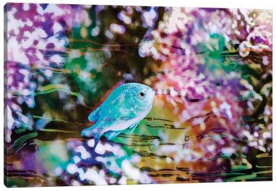 Vibrant Reef I Canvas Art Print