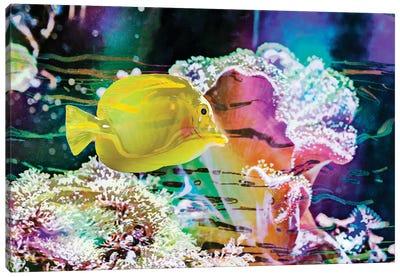 Vibrant Reef IV Canvas Art Print