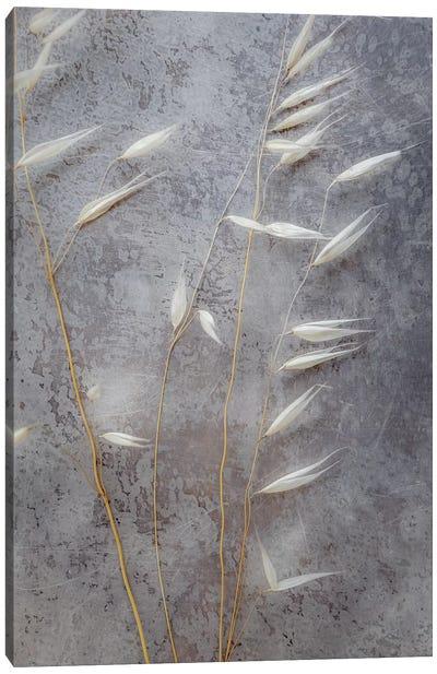 Moonlit Dream II Canvas Art Print