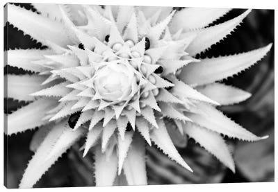 Botanical Under Cold Moonlight II Canvas Art Print