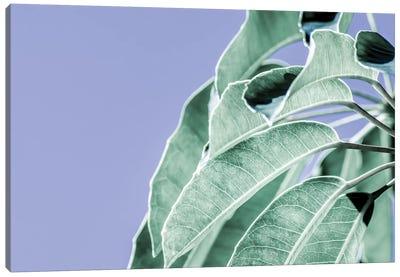 Clear Leaves on Blue I Canvas Art Print