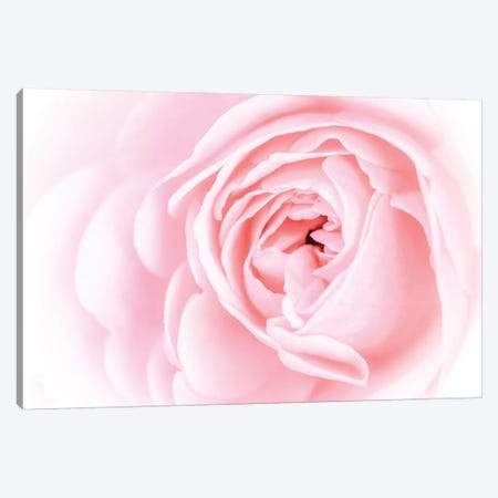Pretty Pink Blooms I Canvas Print #EVB7} by Eva Bane Canvas Artwork