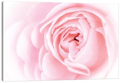 Pretty Pink Blooms I Canvas Art Print