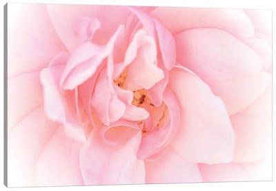 Pretty Pink Blooms III Canvas Art Print