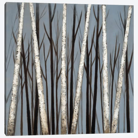 Birch Shadows Canvas Print #EVE1} by Eve Canvas Artwork