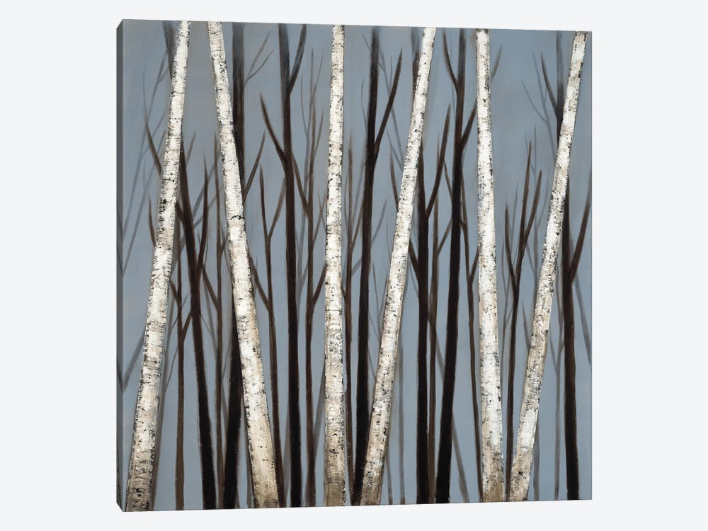 Birch Shadows by Eve 1-piece Canvas Art