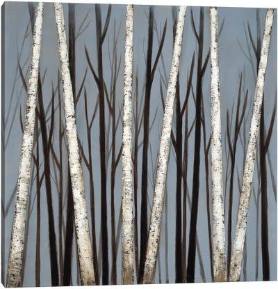 Birch Shadows Canvas Art Print