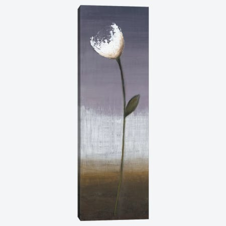 Charming I Canvas Print #EVE8} by Eve Canvas Art