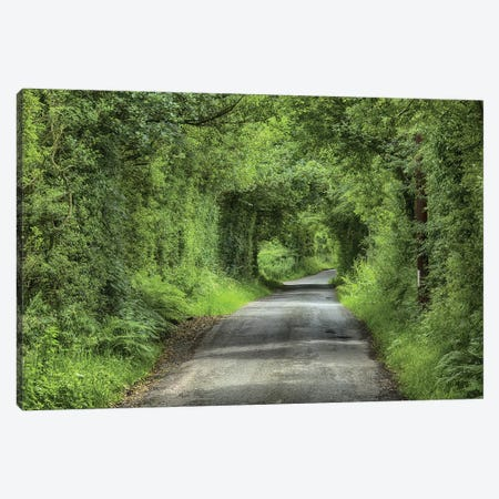 Country Lane And Trees, Chipping, Forest Of Bowland, Lancashire, England, July Canvas Print #EVN1} by John Eveson Art Print