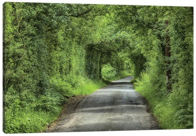 Country Lane And Trees, Chipping, Forest Of Bowland, Lancashire, England, July Canvas Art Print