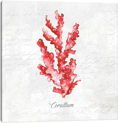 Red Sea Coral Canvas Art Print