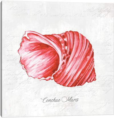 Red Seashell  Canvas Art Print