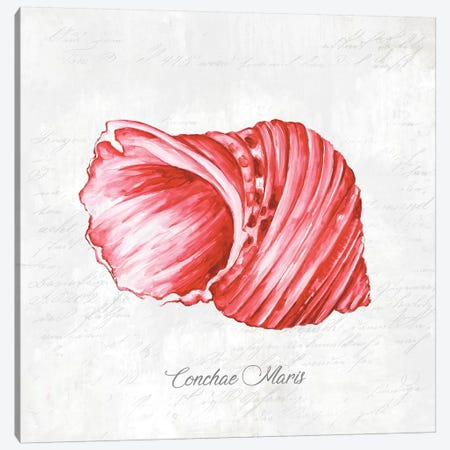 Red Seashell  Canvas Print #EWA123} by Eva Watts Canvas Wall Art