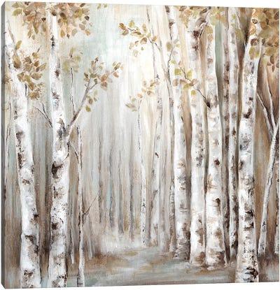 Sunset Birch Forest III  Canvas Art Print