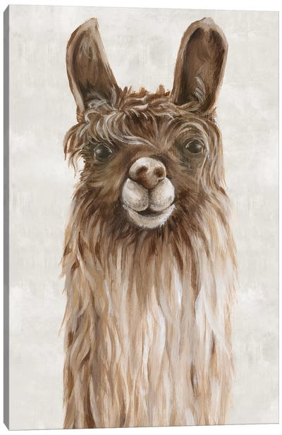 Suri Alpaca I  Canvas Art Print