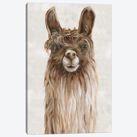 Suri Alpaca I  Canvas Print #EWA136} by Eva Watts Canvas Wall Art