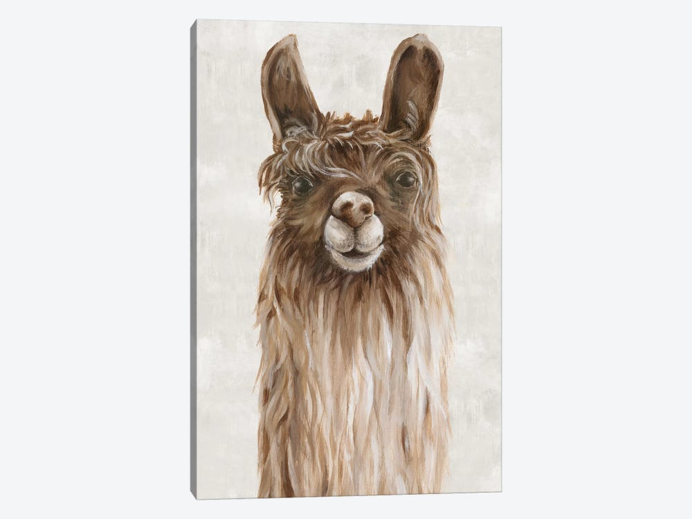 Suri Alpaca I  by Eva Watts 1-piece Art Print