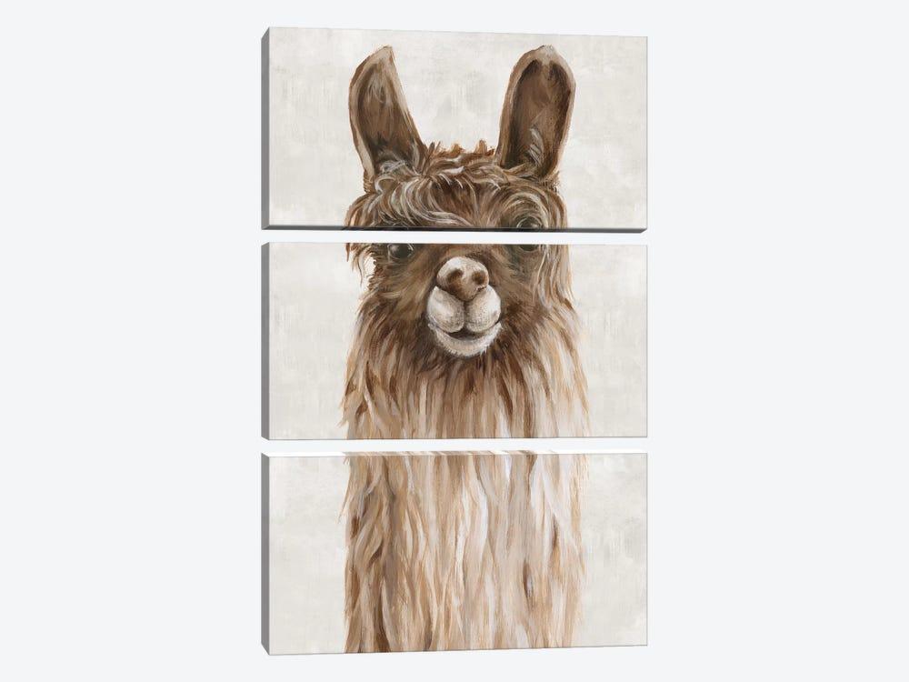 Suri Alpaca I  by Eva Watts 3-piece Canvas Art Print