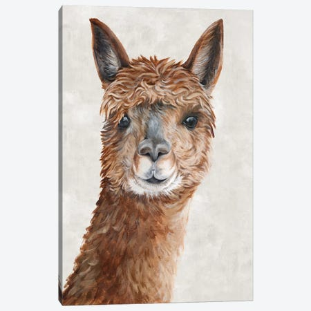 Suri Alpaca II  Canvas Print #EWA137} by Eva Watts Canvas Wall Art
