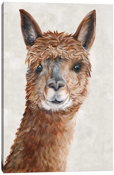 Suri Alpaca II  Canvas Art Print