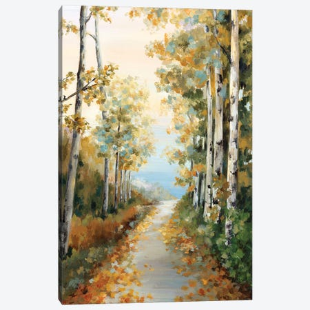Path in the Forest  3-Piece Canvas #EWA150} by Eva Watts Art Print