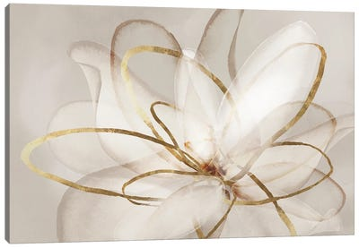 Transparent Beauty III  Canvas Art Print