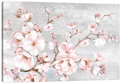 Spring Cherry Blossoms I  Canvas Art Print