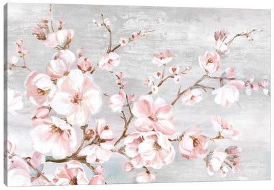 Spring Cherry Blossoms I  Canvas Art Print