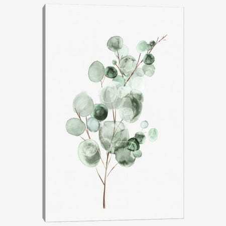 Tender Sprout II Canvas Print #EWA295} by Eva Watts Canvas Art Print