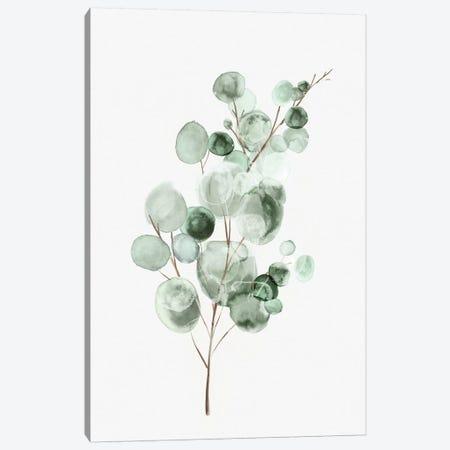 Tender Sprout II Canvas Print #EWA295} by Eva Watts Canvas Art Print