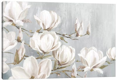 White Magnolia Canvas Art Print