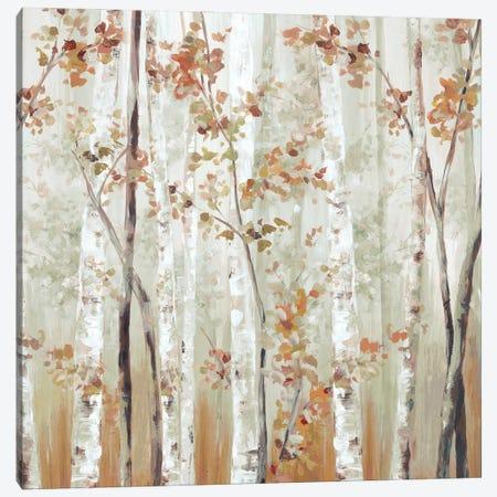 Birch Wood III Canvas Print #EWA371} by Eva Watts Canvas Art Print