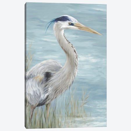 Great Blue Heron Gaze Canvas Print #EWA400} by Eva Watts Art Print