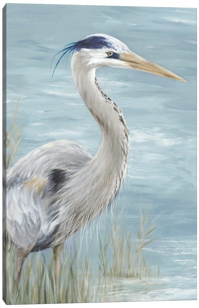 Great Blue Heron Gaze Canvas Art Print