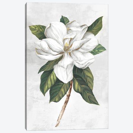 Pearly Beauty I Canvas Print #EWA410} by Eva Watts Canvas Art