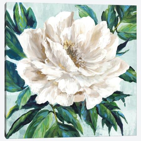 Freshly Bloomed I Canvas Print #EWA463} by Eva Watts Art Print