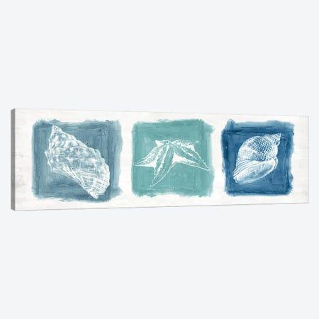 Shell Trio Canvas Print #EWA489} by Eva Watts Art Print